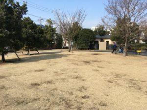 はるさん公園-芝生2
